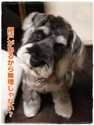 5_25+019_convert_20120603154203.jpg