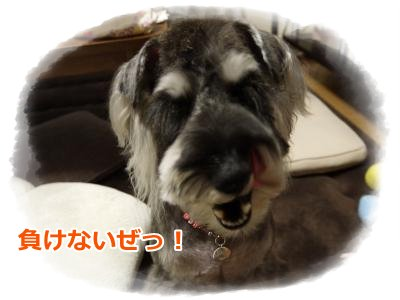 5_25+024_convert_20120525183907.jpg
