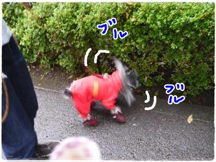 6_10+004_convert_20120610190120.jpg