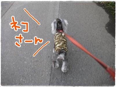 6_13+009_convert_20120613184417.jpg