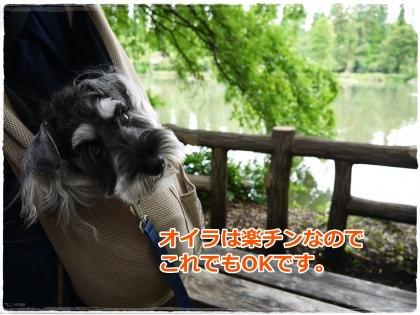 6_17+013_convert_20120617202642.jpg