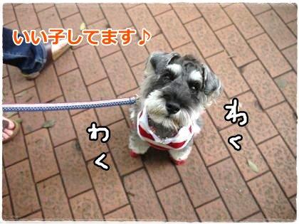 6_17+040_convert_20120617203447.jpg