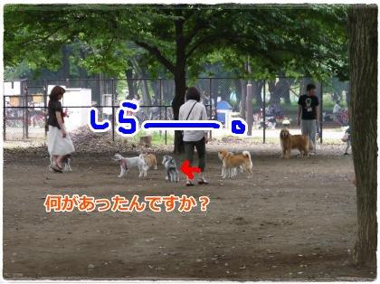 6_25+038_convert_20120627145754.jpg