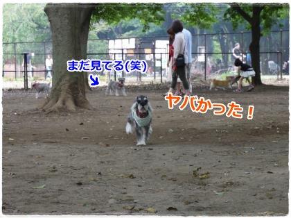 6_25+041_convert_20120627150057.jpg
