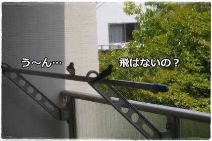 6_3+001_convert_20120603145943.jpg