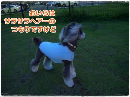 7_16+061_convert_20120716111510.jpg