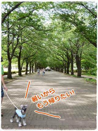 7_17+021_convert_20120717220052.jpg