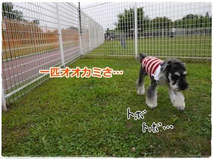 7_22+006_convert_20120724212858.jpg