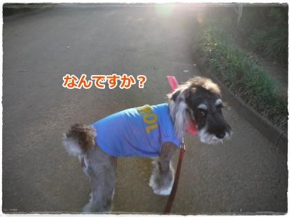8_1+021_convert_20120801214942.jpg