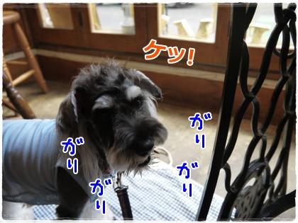 8_25+010_convert_20120825160328.jpg