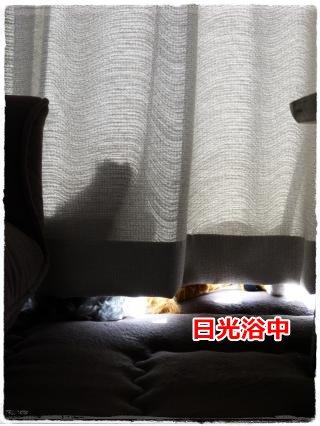 8_30+001_convert_20120830185716.jpg