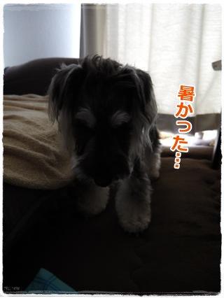 8_30+006_convert_20120830185843.jpg