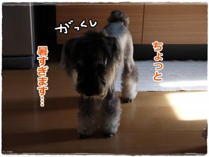 8_4+002_convert_20120805215956.jpg