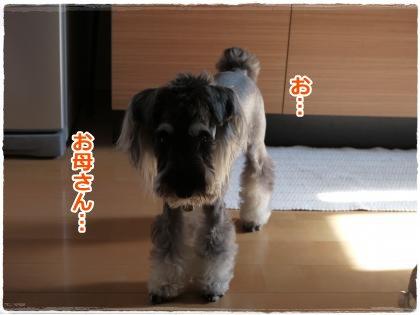 8_4+003_convert_20120805220150.jpg