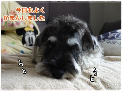 8_4+012_convert_20120805220321.jpg