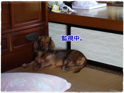 9_23+006_convert_20120926001458.jpg