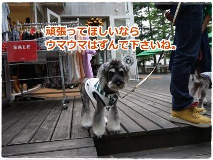 9_9+219_convert_20120909174652.jpg