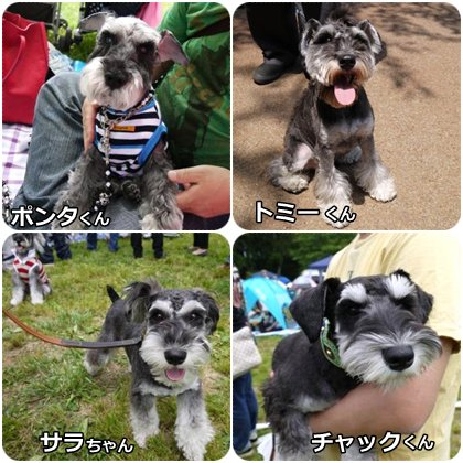 cats5_31_8.jpg