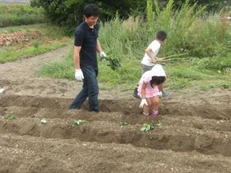 上手に植えて頂きました、向こうの坊主はくんは畑を駆け巡ってました!!