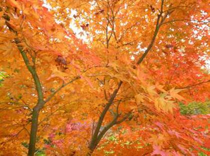 『秋の紅葉・どうだ!!』