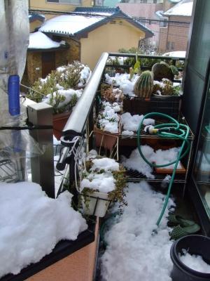 45年振りの東京都心部大雪22cm積雪の翌朝~もう溶け始めました♪何とかなりそうです(~_~)午前8時頃の様子~2014.08.09