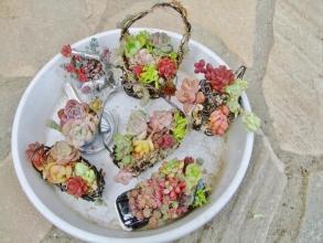 アルミ線で作ったミニカゴに水苔で植えこんでいた多肉を固まる土に植え替えます♪2014.0126