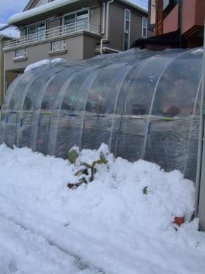 45年振りの東京都心部大雪22cm積雪の翌朝~昨晩2度お湯シャワーで雪落とししました(~_~)~何とかなりそうです(~_~)午前8時頃の様子~2014.08.09