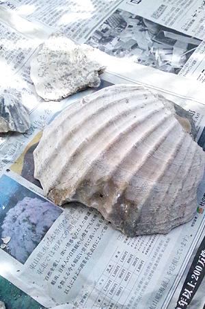 化石DSC03966