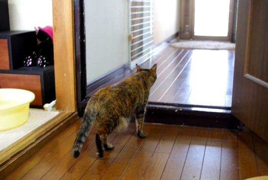 廊下のドアを解放32424@@
