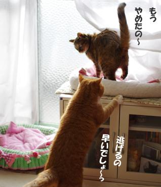 待ちな!!34345345 (1)のコピー