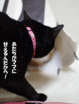 クーちゃん嫉妬心メラメラ34333のコピー