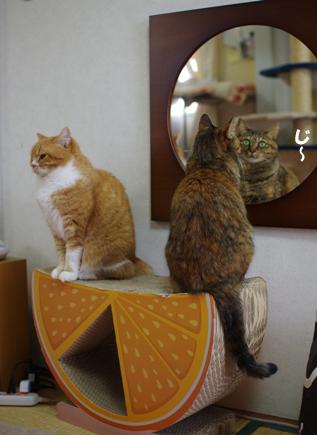 キララはずっと鏡を見ています324242のコピー