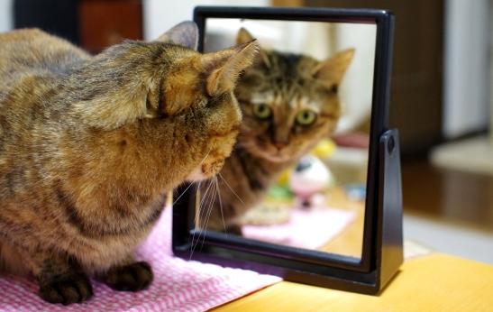 こんなところに鏡が3242