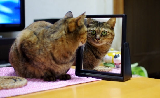 鏡を見つめ続ける^32333333ll