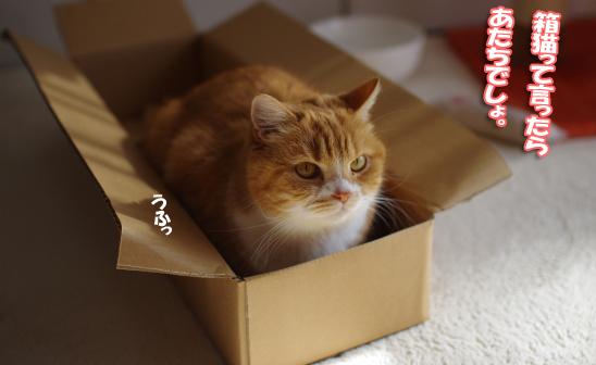 箱にしっかりー23-2-42-3444コピー