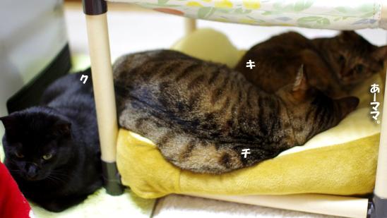 3猫団子ー0--だqだsだのコピー