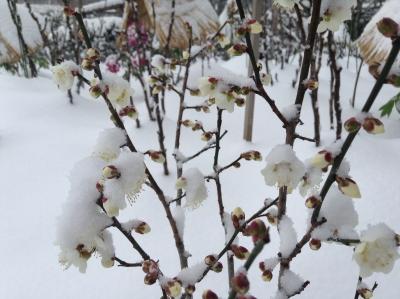2014-02-08-frozen-01.jpg
