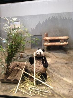 2014-02-08-panda-01.jpg