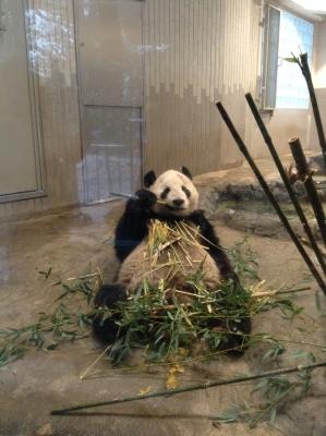2014-02-08-panda-02.jpg