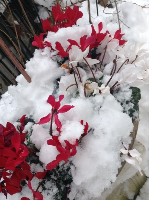 2014-02-09-redwhite.jpg
