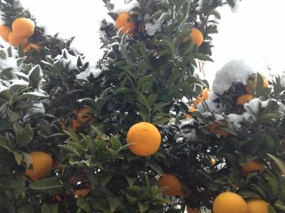 2014-02-14-orange.jpg