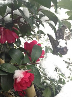 2014-02-14-red.jpg