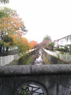 神田川遊歩道@塚山公園