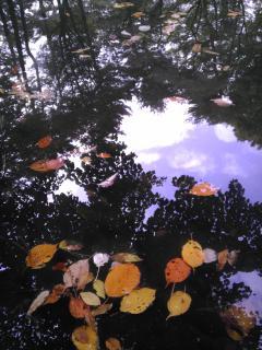 塚山公園の池