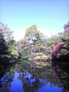 2012/11/20 和田堀公園