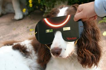 2012年5月21日金環日食犬
