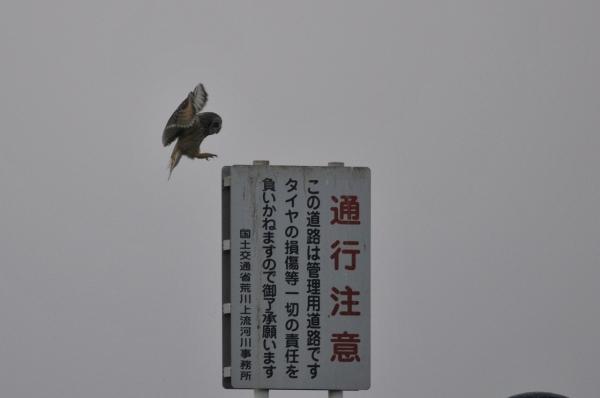 komi_DSC8872.jpg
