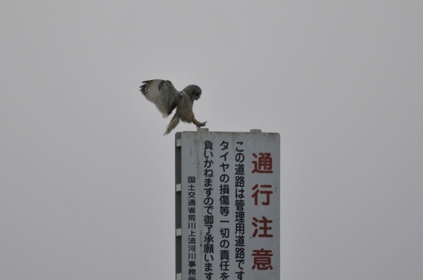 komi_DSC8873.jpg