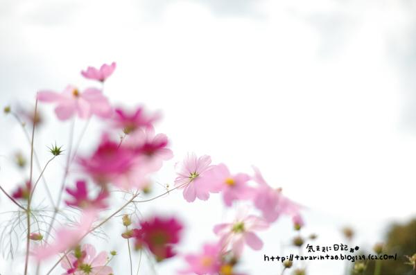 blog387.jpg