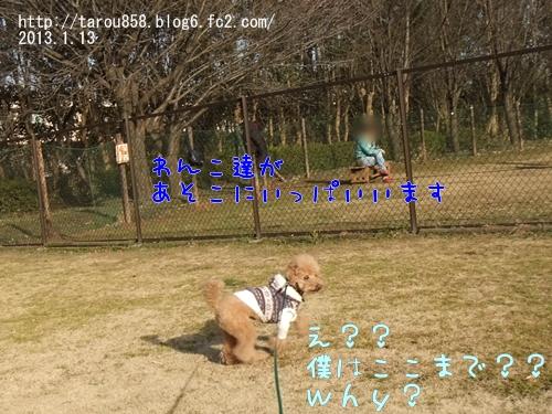 DSCF9199-1.jpg